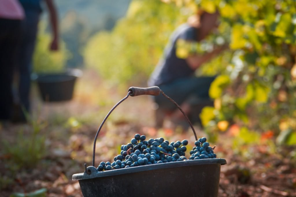 Vendanges_9742_Web