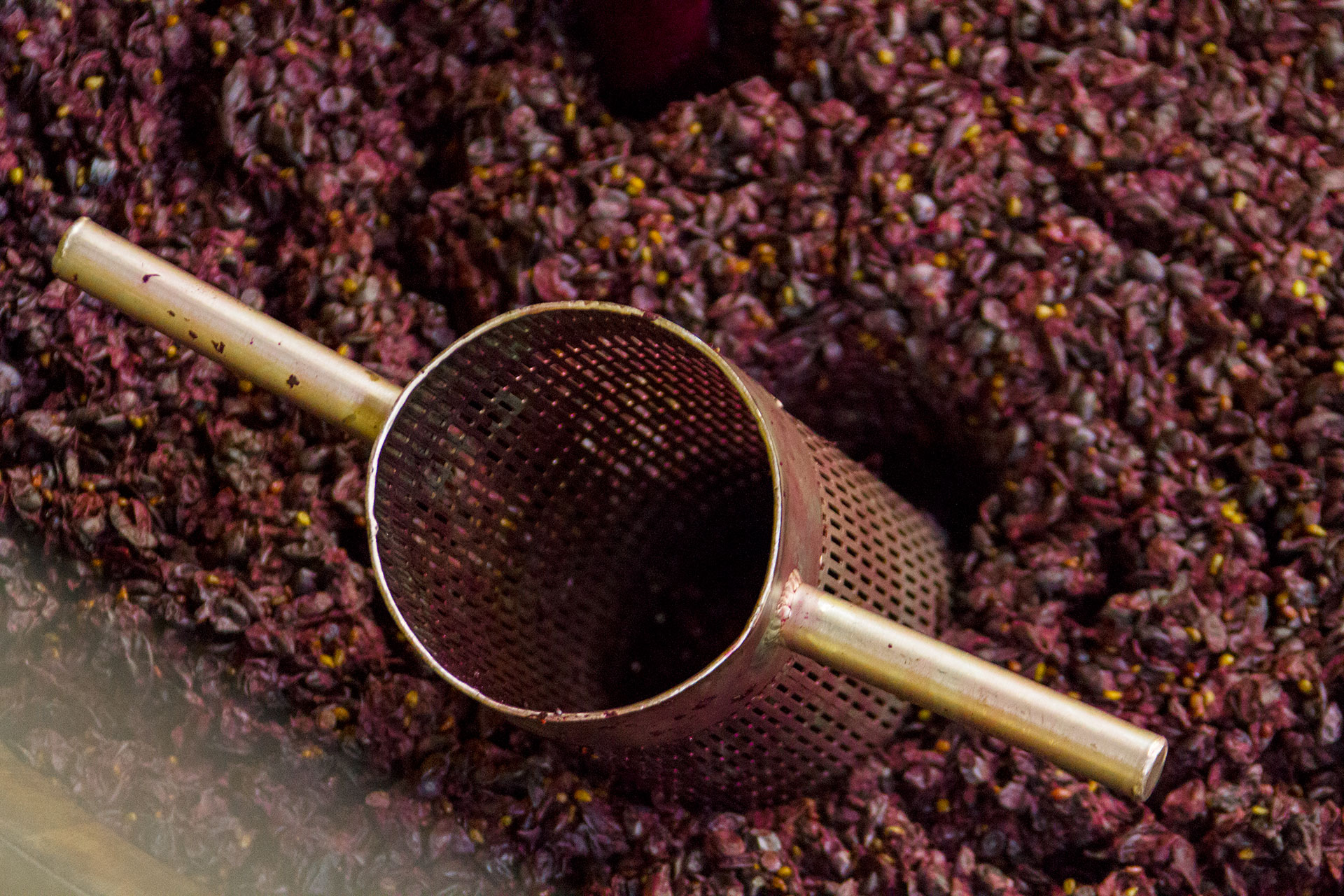 Winemaking: Punching